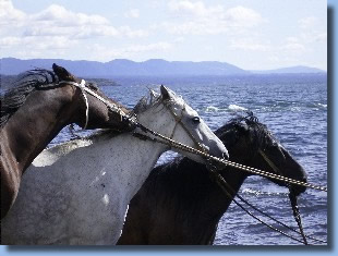 Horses on the lake on a horseback ride in chile