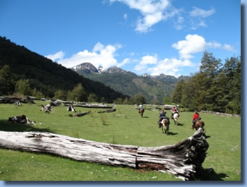 Riders crossing a pasture on a horseback trail ride in NP Huequehue, Chile